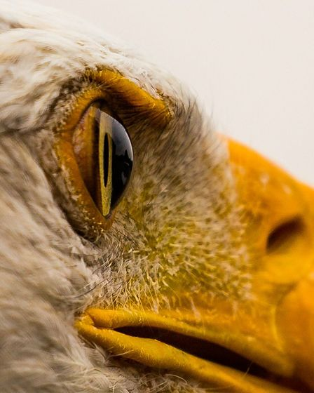 Eagle Eye. Picture: Keith Ridings