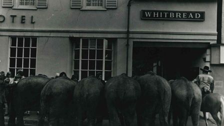 Elephants in Chequer Street outside The Bell pub.