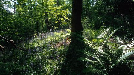 Warburtons Wood, Chesire