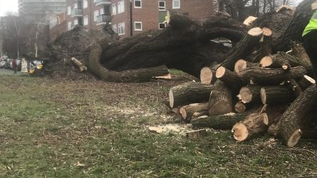 The fallen tree was cut down by workers to make the site safe