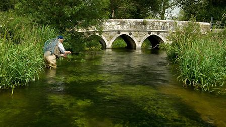 In search of trout on a chalkstream