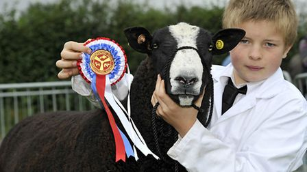 The Zwartbles sheep section is keenly contested