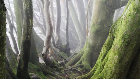 Into the Mist taken on the Quantocks by Ben Meek