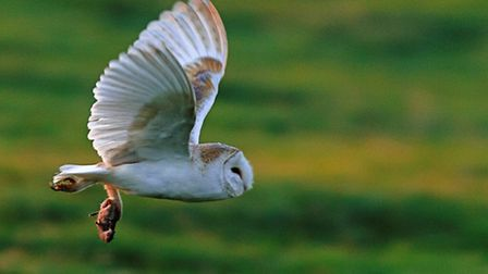 Barn-owl-and-lunch--photo-by-A-bbd4b153
