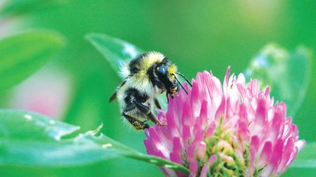 Gardeners can provide bees with some fantastic flowers full of nectar and pollen