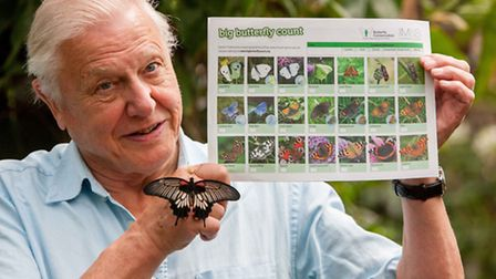 Sir David Attenborough launches the Big Butterfly Count, at London Zoo. Wednesday 11 July 2012. UK