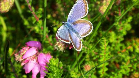 Butterflies and wildflowers thrive on the conditions at Valley of the Stones National Nature Reserve