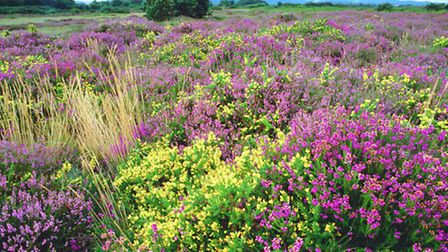 Stoborough Heath forms part of the unique landscape of the Dorset Area of Outstanding Natural Beauty
