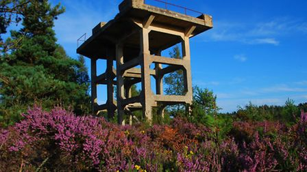 Sandford Heath Nature Reserve has a rich history waiting to be discovered. Image: Ben Buxton