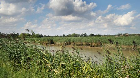 GALLERY: A beautiful summer's day in Snape Maltings, Suffolk.