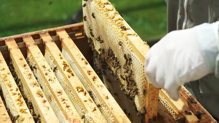 Worker bees on the super frame building the comb