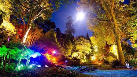 Abbostbury Subtropical Gardens are transformed by illuminations. Photo by Stephen Banks