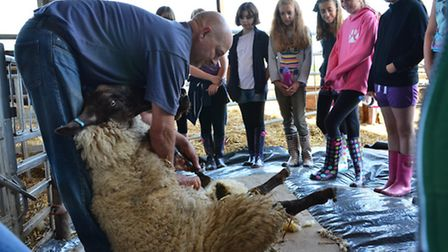 Dorset school pupils on a Farming and Countryside Education visit to Melbury