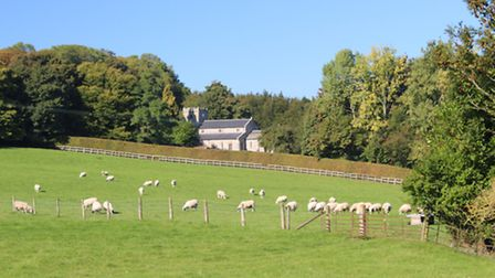 Looking across the fields to St Mary's in Tarrant Gunville