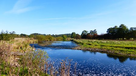 View of the Ribble near Sawley