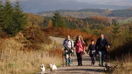 Grizedale - Forestry Commission