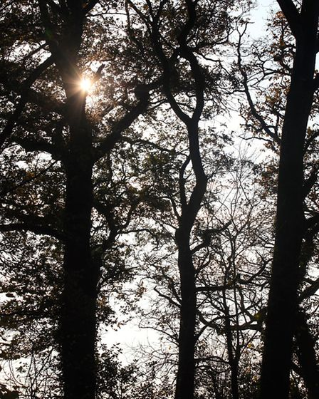 A glint of sunlight through the trees in Coram Wood