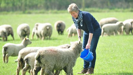 Gail Sprake on her farm near Bungay with her lambs.