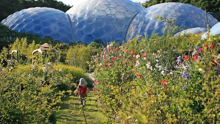 Eden-Project---Cornwall-Life