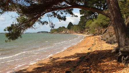 One of the beaches on Brownsea Island