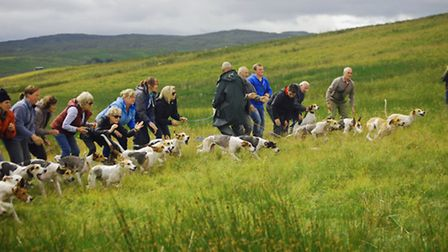 Final part of trail laid as hounds start race