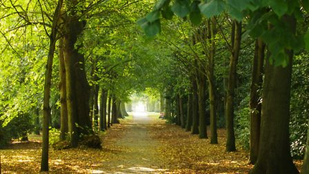 Early-autumn-in-Chantry-Park---afa0ef3a