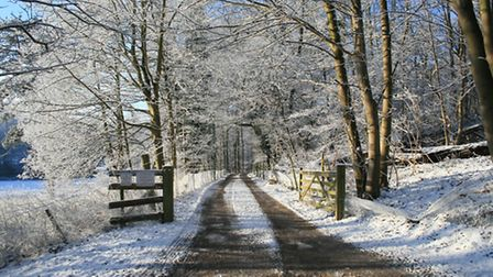 Mick Collantine's pretty winter scene taken near Milsoms Kesgrave Hall, on the outskirts of Ipswich