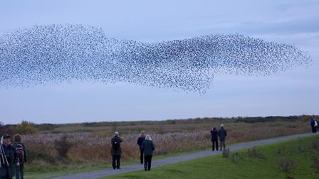 Barry Pullen's superbly captured image of a murmuration of starlings at RSPB Minsmere