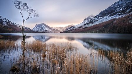 The Lone Tree at Buttermere by Stephen Hinde