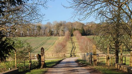 Looking back to Conygar Wood from Winterborne Came drive