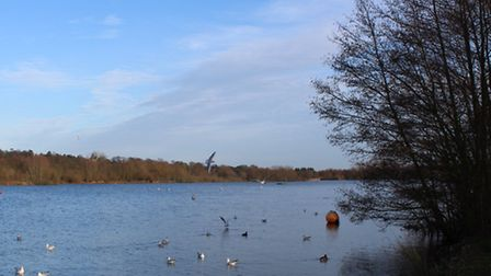Plenty of wildlife to be seen at the broad's edge