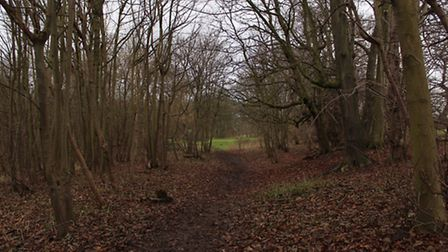 Wander through the pretty woodland route