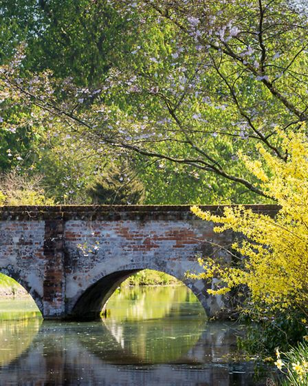 Brick-built bridge over 13th century moat, overhung by blossom and forsythia. Late-flowering daffodi