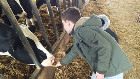 A student greets the cows