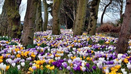 Spring has sprung, Fleetwood by Austin Donnelly