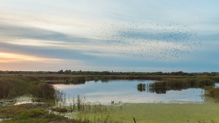 Celebrating 40 years of the glorious RSPB Strumpshaw Fen. Picture: Phil Barnes Photography