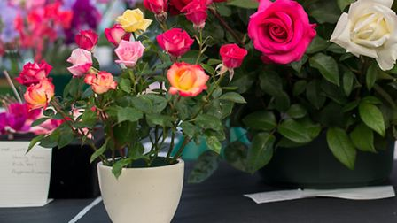 Visitors will flock to the beautiful floral marquee at Taunton Flower Show