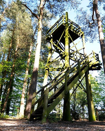 Holt Country Park observation tower.PHOTO: ANTONY KELLY