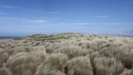 The Lancashire dunes are home to much wildlife