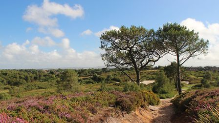 Upton Heath - home to a wide variety of flora and fauna