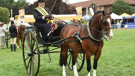 Mike at a carriage driving event (picture: www.1stclassimages.com)