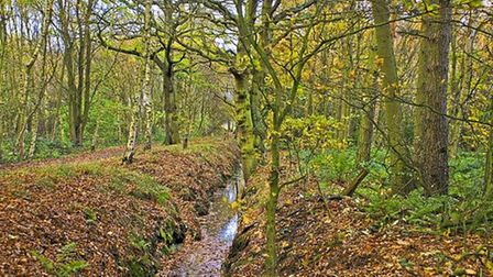 Autumnal Path, Mere Sands Wood by Sheila Phillips