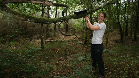 LWT Red Squirrel Officer Rachel Miller places a hair trap in woods. The hair of the squirrel is caug