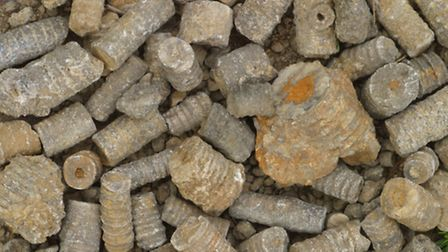 Fossils and crinoids on the floor at Salthill Quarry