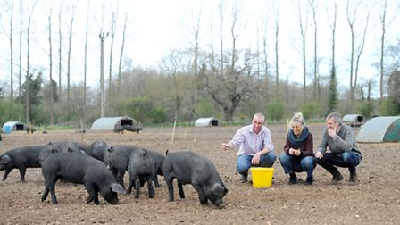 Rob Simonds with Vanessa and Les Scott and Rob's Large Black pigs