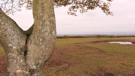 Visitors can enjoy the full splendour of the Quantocks from the top of Cothelstone Hill