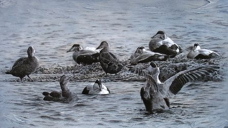 Eider ducks by Andy Beckkett, who studied at Blackpool and Fylde College