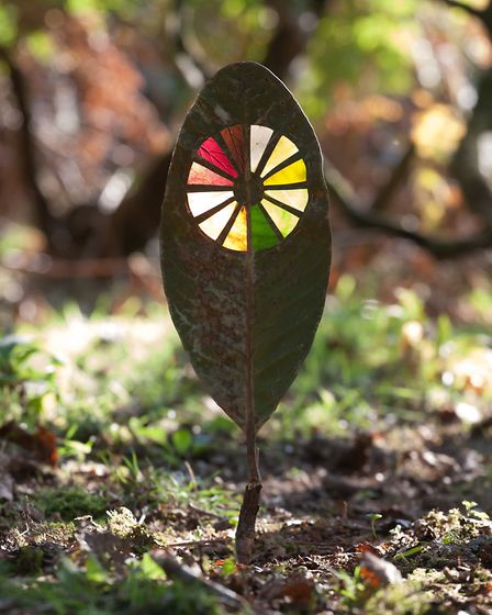 Autumn Colour Clock: Slivers of autumn leaves including crab apple, copper beech, ivy displayed with