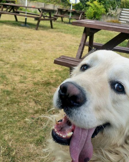 Charlie in the beer garden at the Cellar House in Eaton
