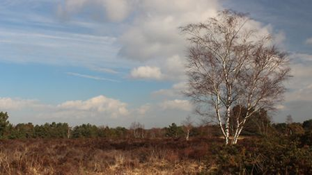 The view over Parley Common one of the last remnants of Dorset ancient heath
